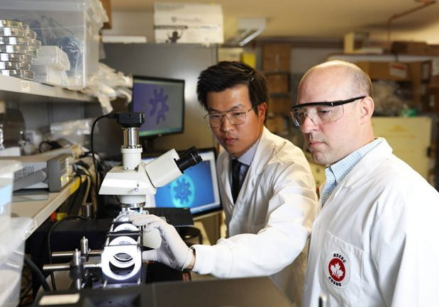 Shuailong Zhang (left) and Aaron Wheeler, have designed microrobots (working at the sub-millimetre scale) that can be operated by optoelectronic tweezers for cell manipulation. (Photo: Dan Haves)