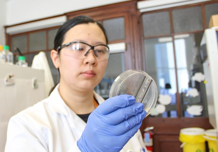 Yimu Zhao demonstrates the BioWire II, a platform for growing heart cells outside the body